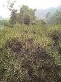 竹香桂花园