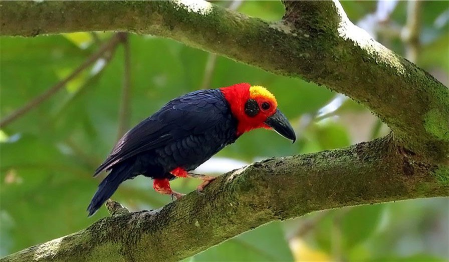婆罗洲观鸟节