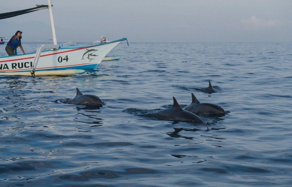 与精灵共舞,罗维娜追逐海豚之旅
