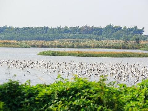 南沙湿地旅游景点图片