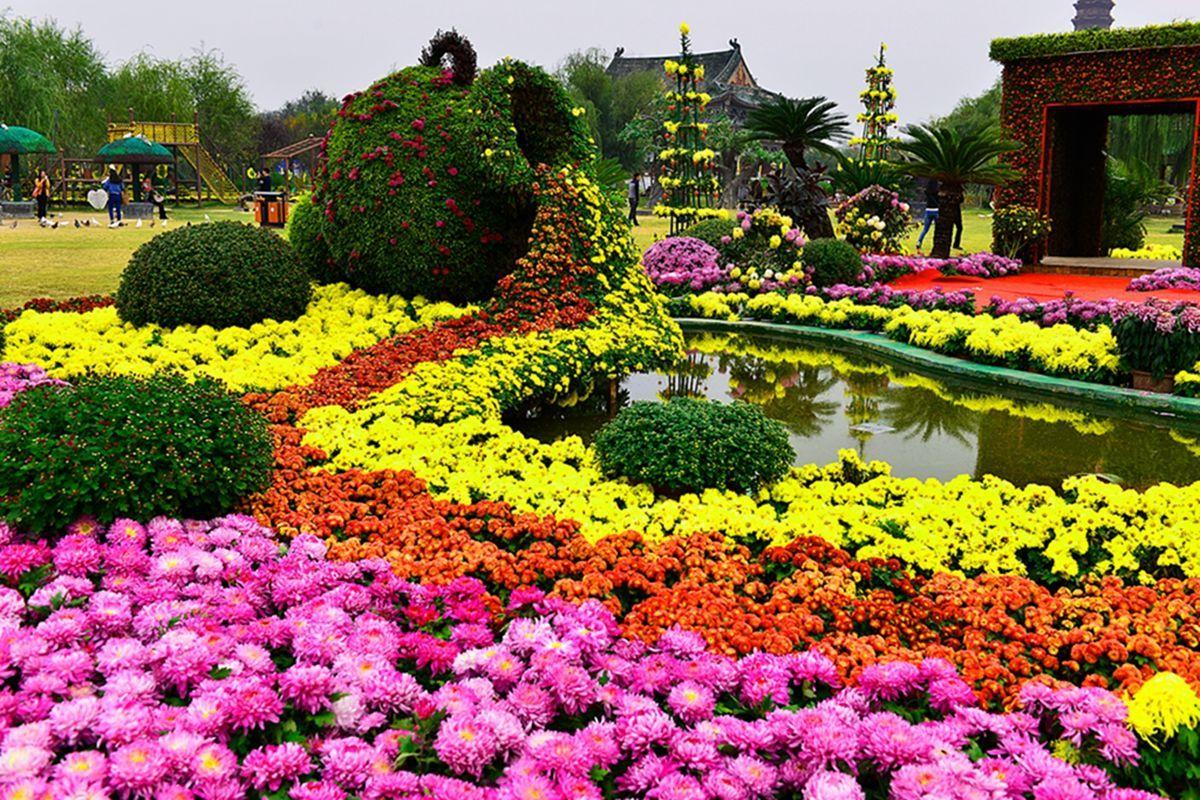 开封菊花文化节