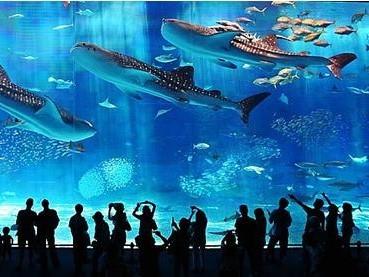 沖绳国际洋兰博览会