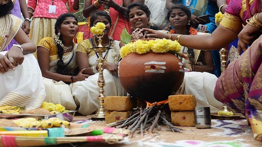 泰米尔收获节(Tamil Thai Pongal Day)