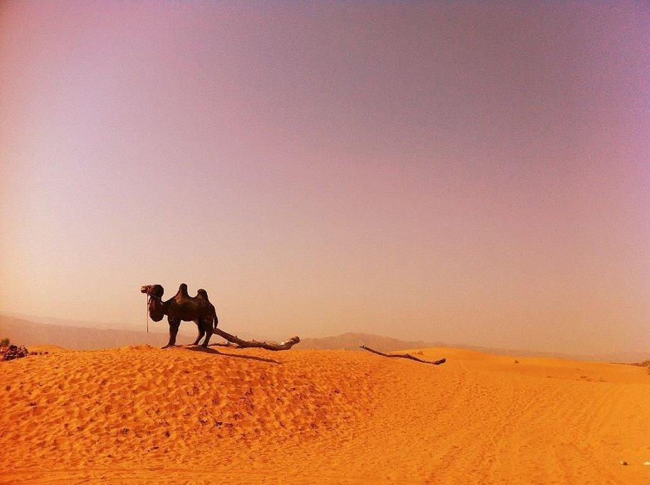 你是风儿我是沙——辽阔沙漠一日游