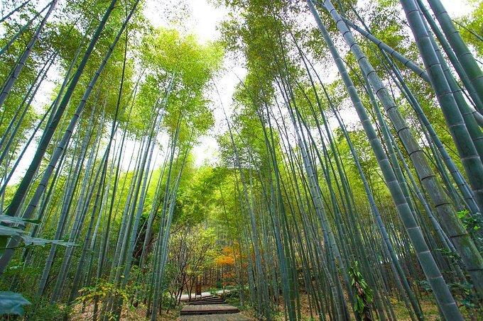 隐居竹林,常州清新竹海一日游
