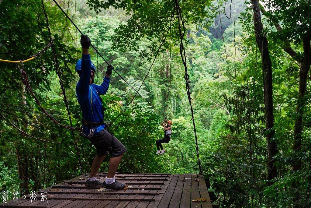 飞翔的长臂猿丛林飞跃