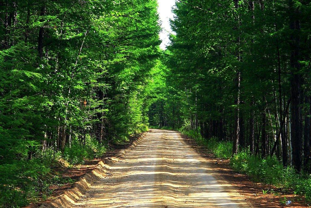 穿越神秘原始森林,呼伦贝尔生态之旅