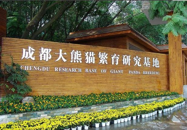 成都大熊猫繁殖培育基地
