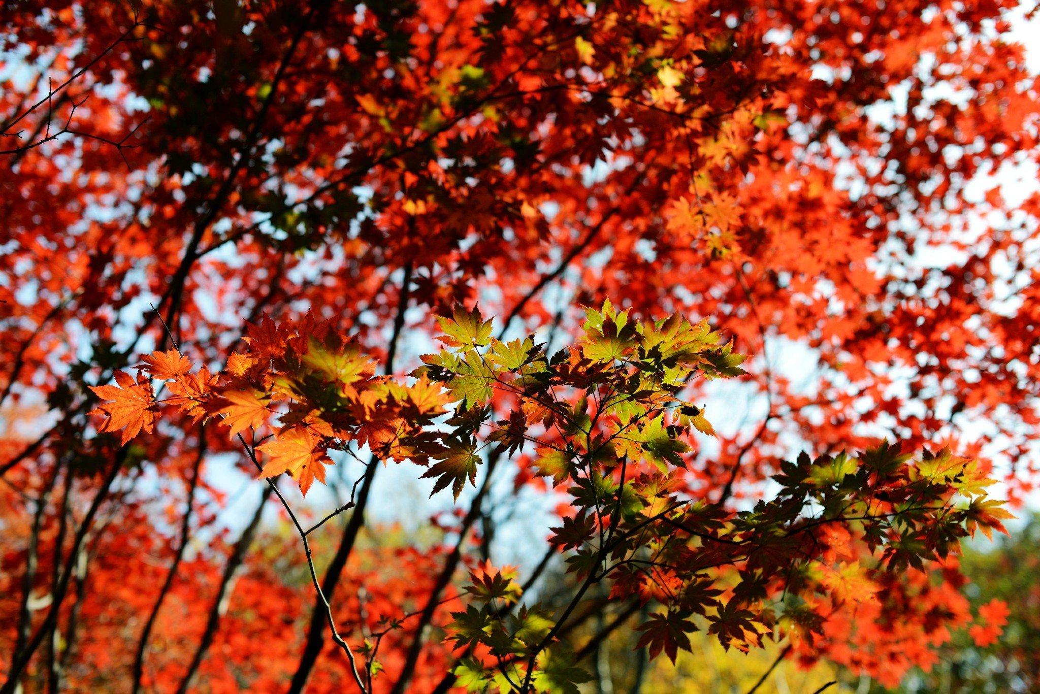 去本溪,寻觅那迷人的秋色