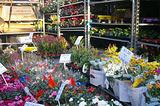 哥伦比亚街花卉市场