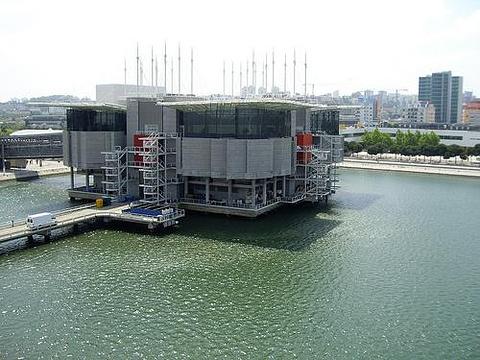 里斯本海洋馆旅游景点图片