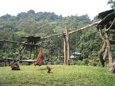 雅加达旅游景点图片