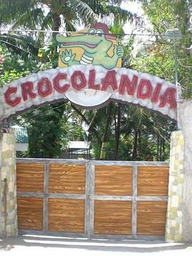 Crocolandia的图片