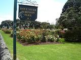帕尼尔玫瑰花园