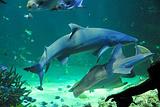 悉尼水族馆
