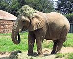 约翰内斯堡动物园