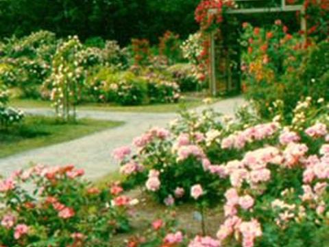 Rose Garden旅游景点图片
