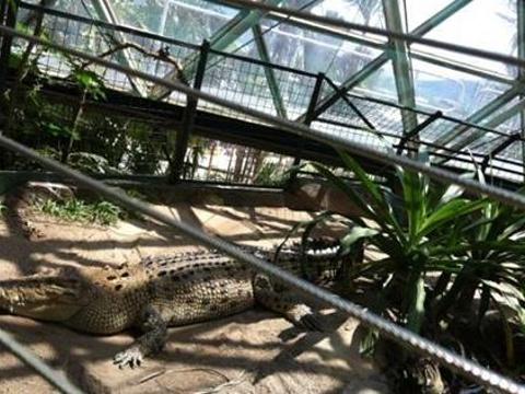 凯恩斯室内穹顶野生动物园旅游景点图片