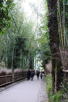 嵯峨野竹林的图片