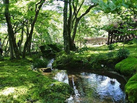 天龙寺旅游景点图片