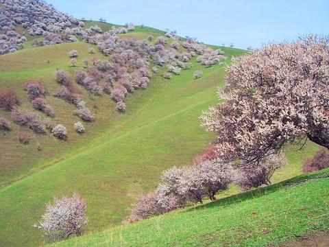 杏花沟的图片