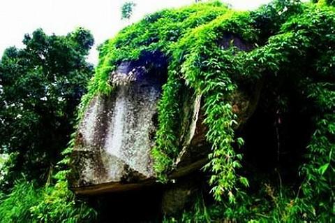 黎母山森林公园