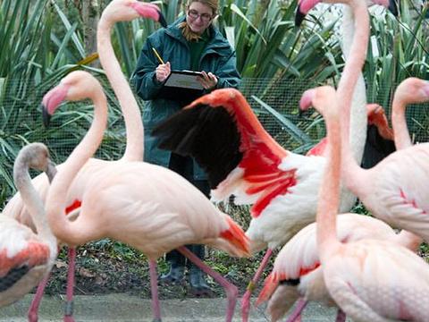 伦敦动物园旅游景点图片