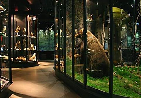 自然历史博物馆的图片