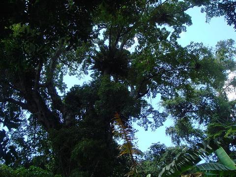 阿陀岭森林公园