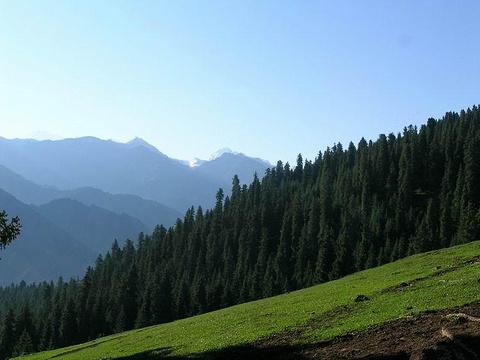 雪岭云杉自然保护区旅游景点图片