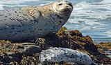 海事岬哺乳动物中心
