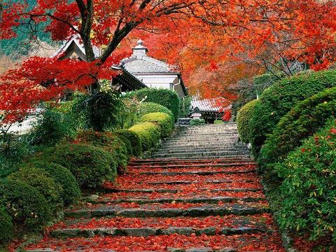 香山公园的图片