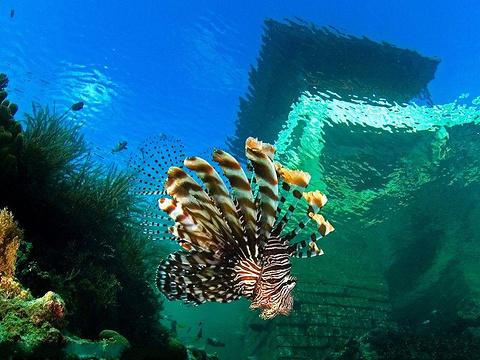 厦门海底世界旅游景点图片