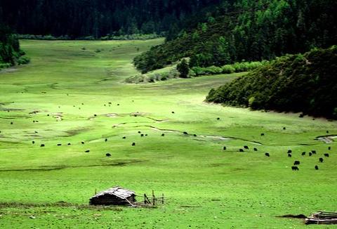 普达措旅游图片