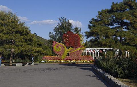 北京植物园的图片