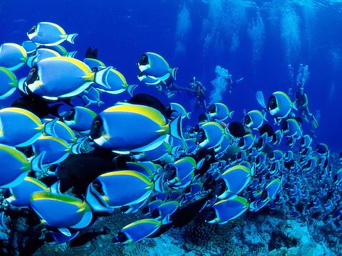 富国海底世界