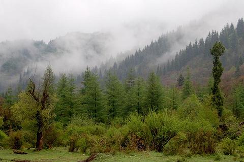 吐鲁沟国家森林公园的图片
