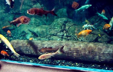 上海海洋水族馆旅游景点图片