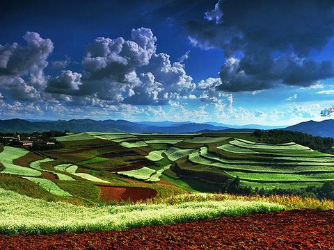 东川红土地旅游景点图片