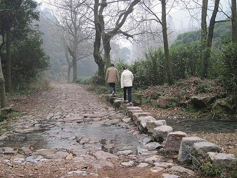 九溪烟树旅游景点图片