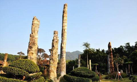 仙湖化石森林的图片