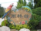 青岛雨林谷