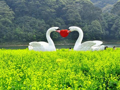 仙湖化石森林旅游景点图片