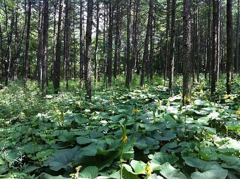 森林氧吧的图片