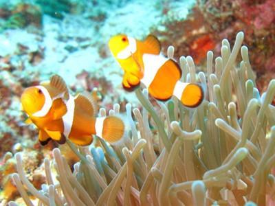 热浪岛浮潜一日游