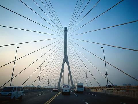 杨浦大桥旅游景点图片