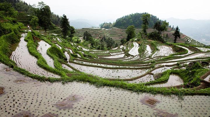 紫鹊界梯田旅游图片