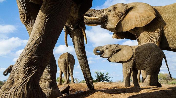 博茨瓦纳旅游景点图片
