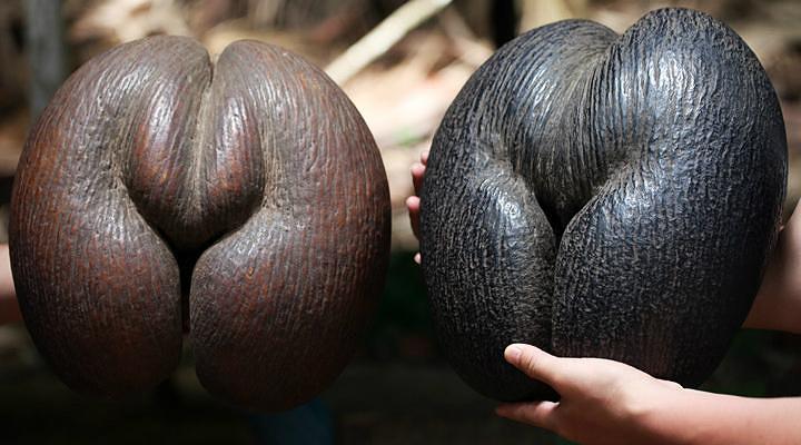海椰子旅游图片
