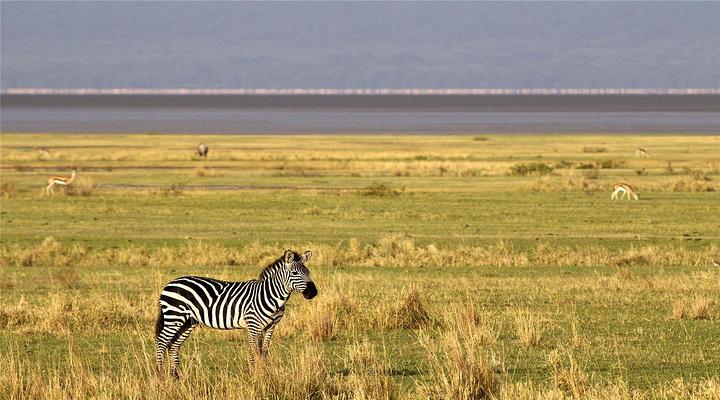 坦桑尼亚旅游景点图片